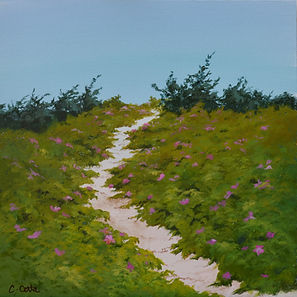 Rosa rugosa, path, dunes, Little Island, Cape Cod, West Falmouth