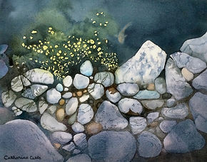 rocks, pond, shoreline, water, fish, nature