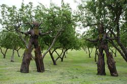 tree stilt costumes (1)