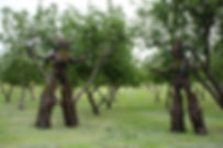 tree stilt costumes.jpg