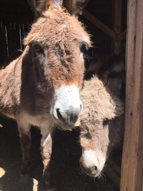 Damn, burros are cute! And sweet.