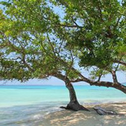 The Reaching Tree (Tamanu)