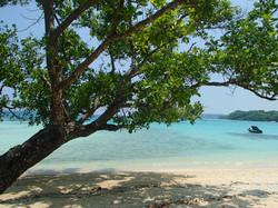 2014 Beach Tree View -12-11 14.47.40