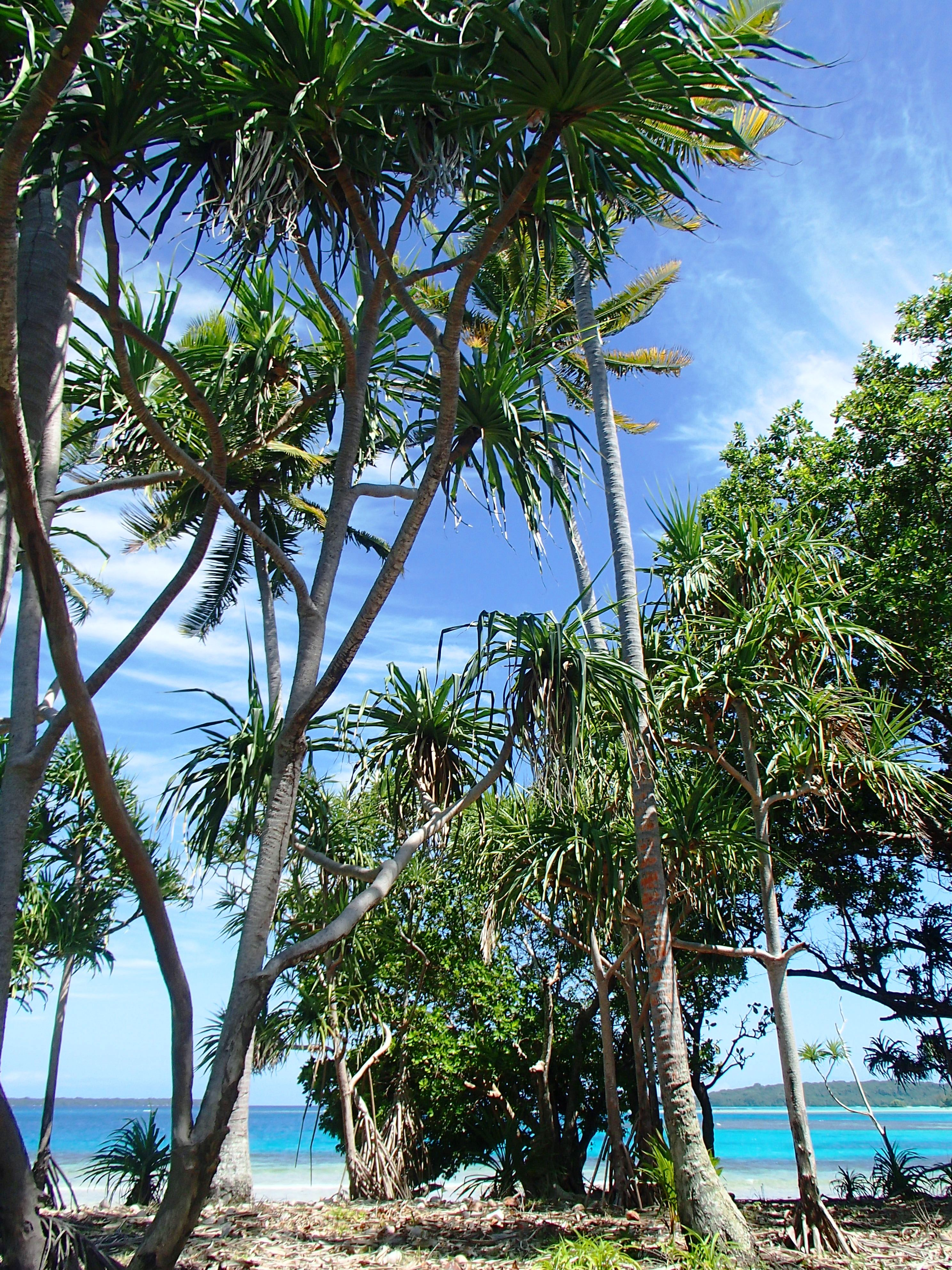 M Island Pics 2014 (6).jpg