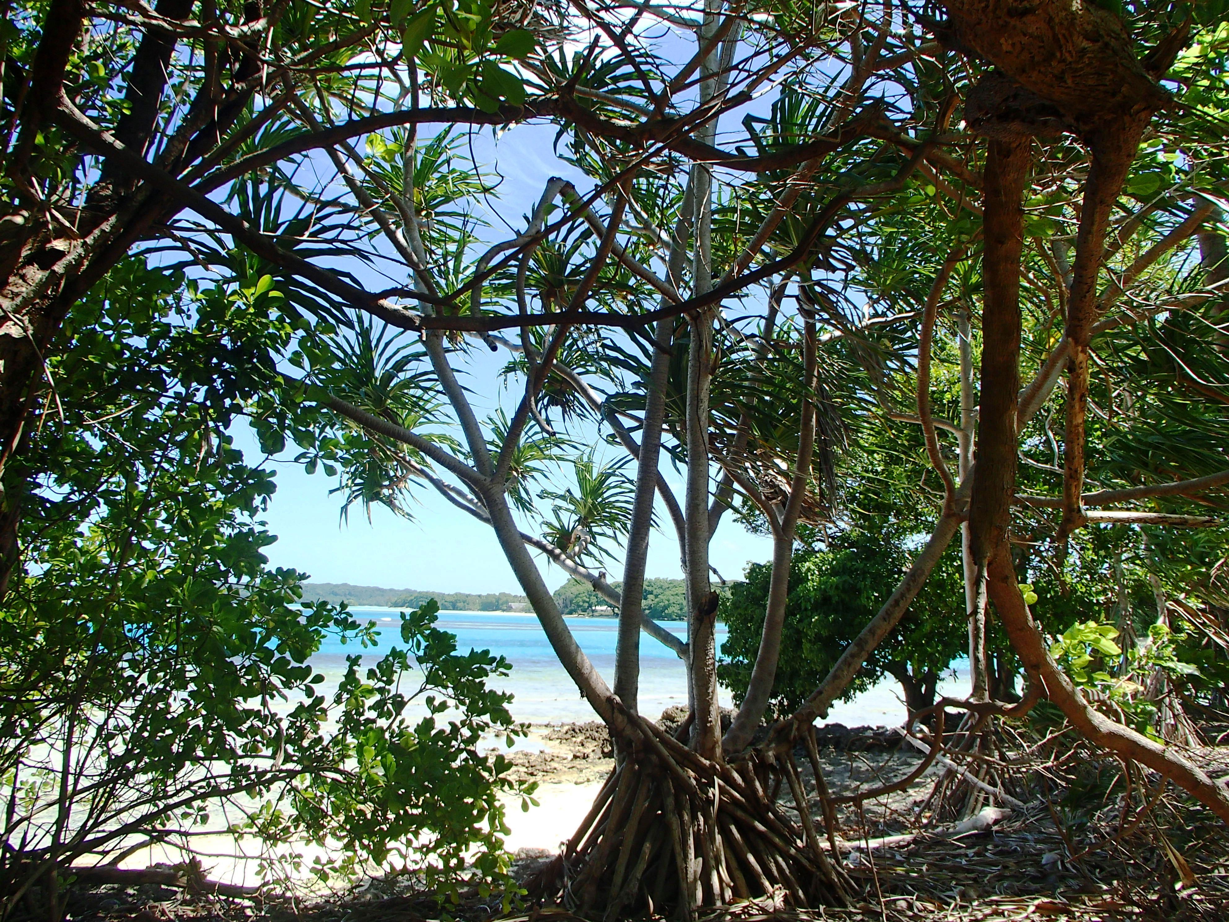 M Island Pics 2014 (8).jpg