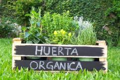 huerta_organica_iii.jpg