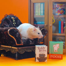 12th December: *UPDATE TODAY*  As with this year, you can't predict anything can ya? There has been a sudden delay with delivery...  Apologies, LIVE video time will NOW be 4pm today!!! www.facebook.com/Hannah.drimer/ In the meantime chill out like Monty on the couch...🐹