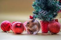 CHRISTMAS bobbles.jpg