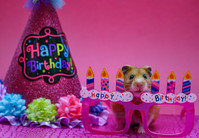 BIRTHDAYS pink.jpg