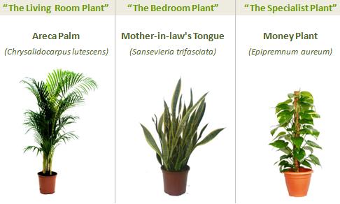 φυτά που φιλτράρουν τον αέρα