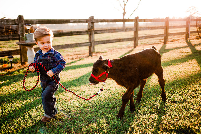Baby Rancher with His Baby Calf | Loxley, AL Family Photography