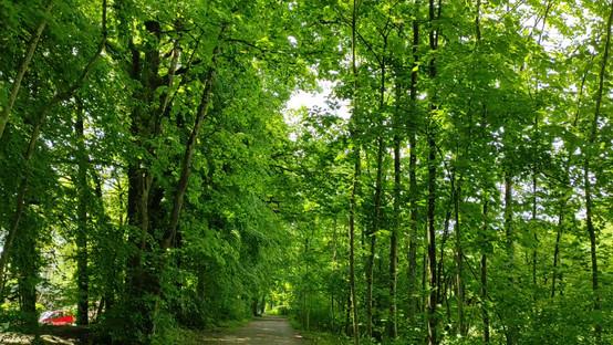 Bright green and fresh air