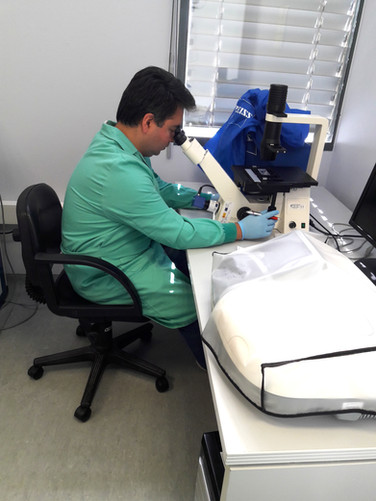 Guillermo at the microscope