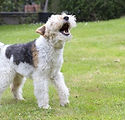 Barking%2520dog_edited_edited.jpg