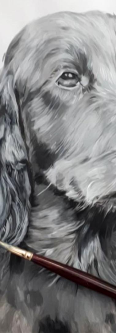 Réalisation cocker anglais à la peinture acrylique Sublim O Poil