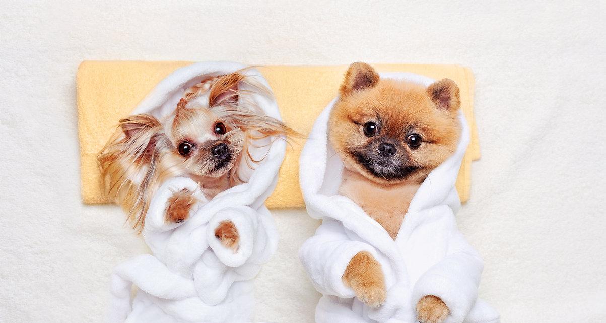 duo chien.jpg