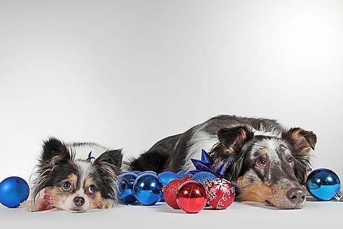dogs-3091321_1920.jpg
