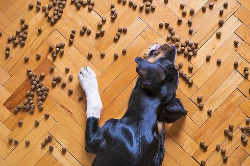 dog-food-5175619_1920.jpg