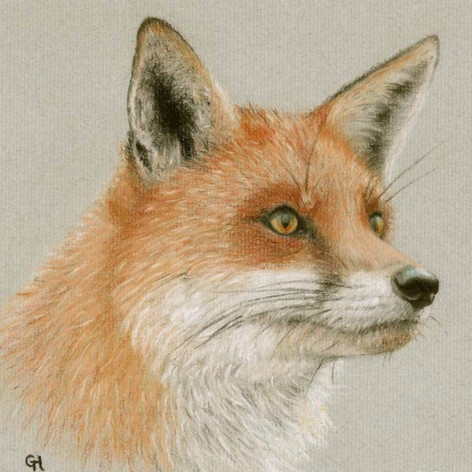 Red Fox Pastel Drawing