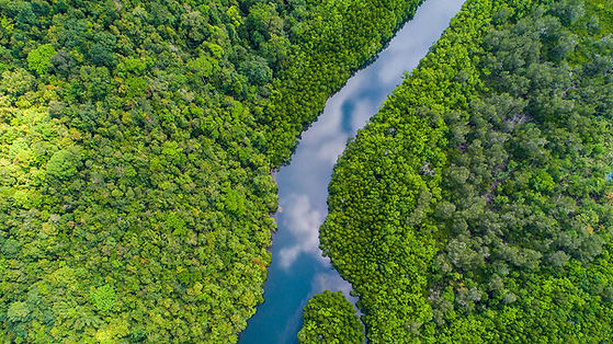 Blog-Header-Tropical-Rainforest-River.jpg