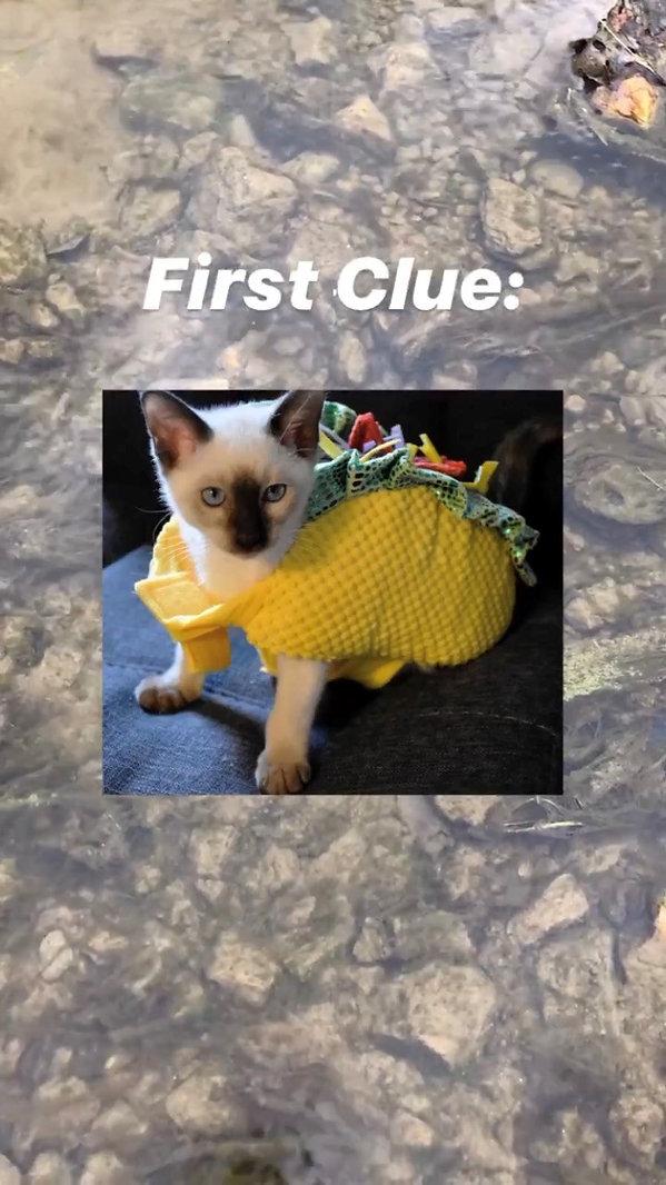clue 1.jpg