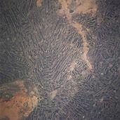 Sudan_Gezira_Plain_1997.jpg