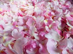 Tri des pétales de roses