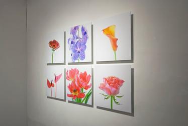 2014年4月4日~4月14日    個展「Life in the water / 美の境界線とは」  神戸 ギャラリー 301