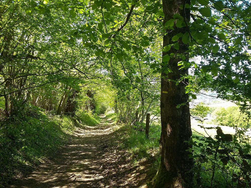 Chemin sous les bois causses du quercy