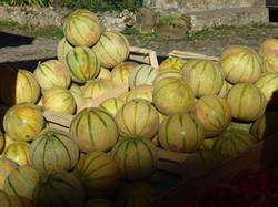 Les melons et autres productions locales de la Vallée de la Dordogne