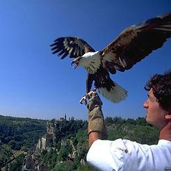 Rocamadour et son magnifique spectacle du rocher des aigles