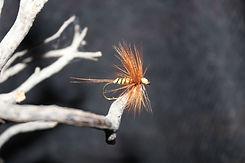 Reconnectez vous à la nature avec la pêche à la mouche