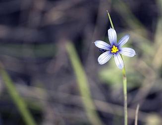 flower-2372998_1920.jpg