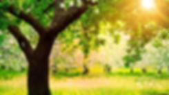 243657-sunlight-grass-flowers-trees-natu