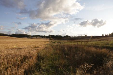 A field in August