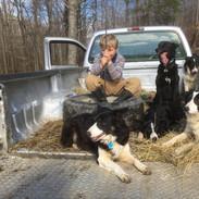 Billy Scott with Dogs