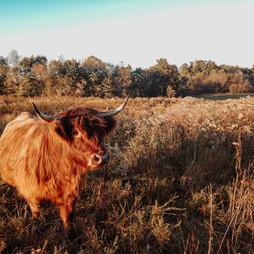 Mira in a field.jpg