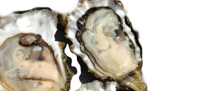 Large BBQ Oysters (dozen) - Tacoma
