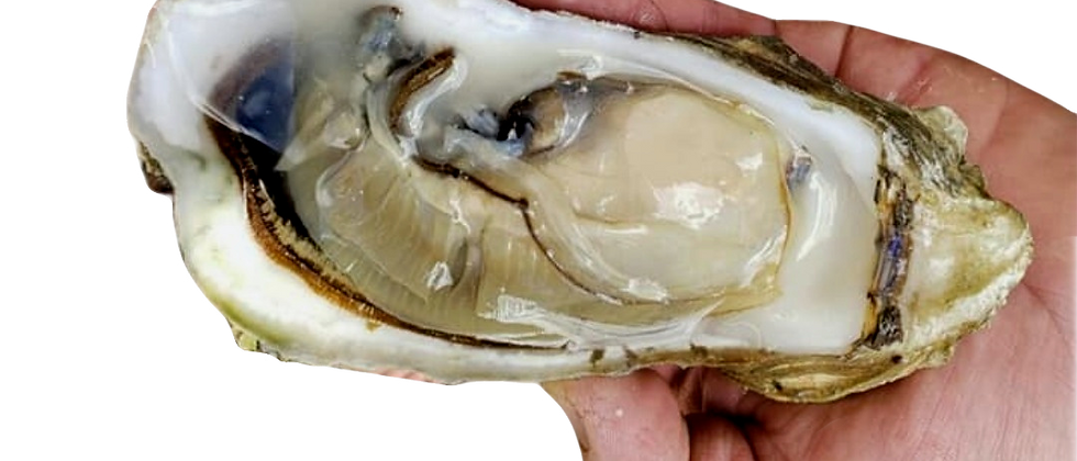 Large BBQ Oysters (Wholesale)