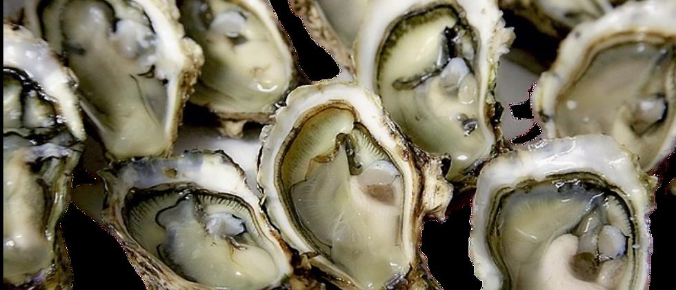 Prime Kumamoto Oysters (dozen) - Bellevue
