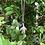 Thumbnail: Colar Quartzo Azul + Tartaruguinha