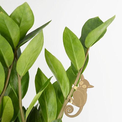Plant Animal Bush Baby