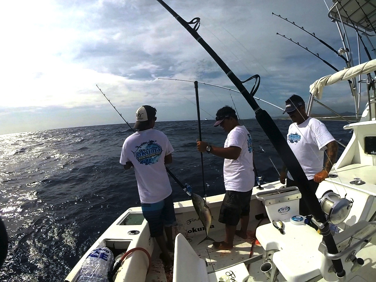 Abundant tuna