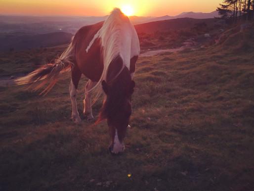 Sunset, cheese & Rhune : le premier bivouac