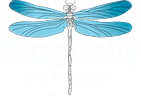 LOGO dragonfly062020.png