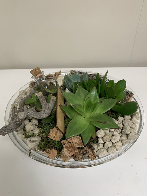 Glaswerk met vetplanten