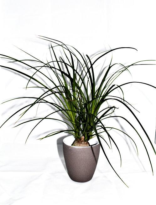 Decoratie plant groen + Pot