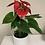 Thumbnail: Rode Anthurium met pot