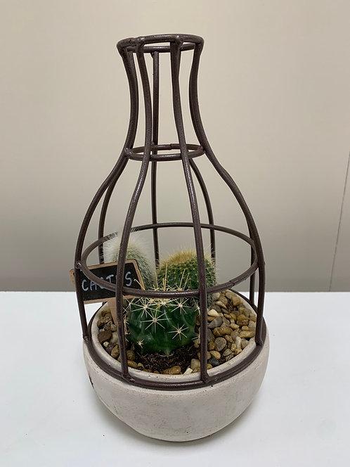 Constructie met cactussen