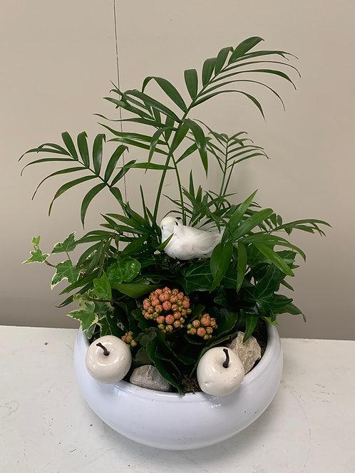 Schaal met plantjes